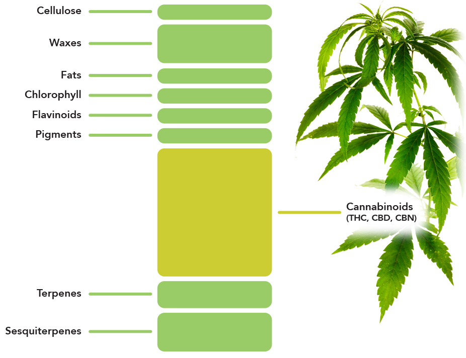 an analysis of cannabis plant The highs and lows of cannabis testing  cannabis is a genus of flowering plant with compound serrated  to develop validated methods for cannabis analysis,.