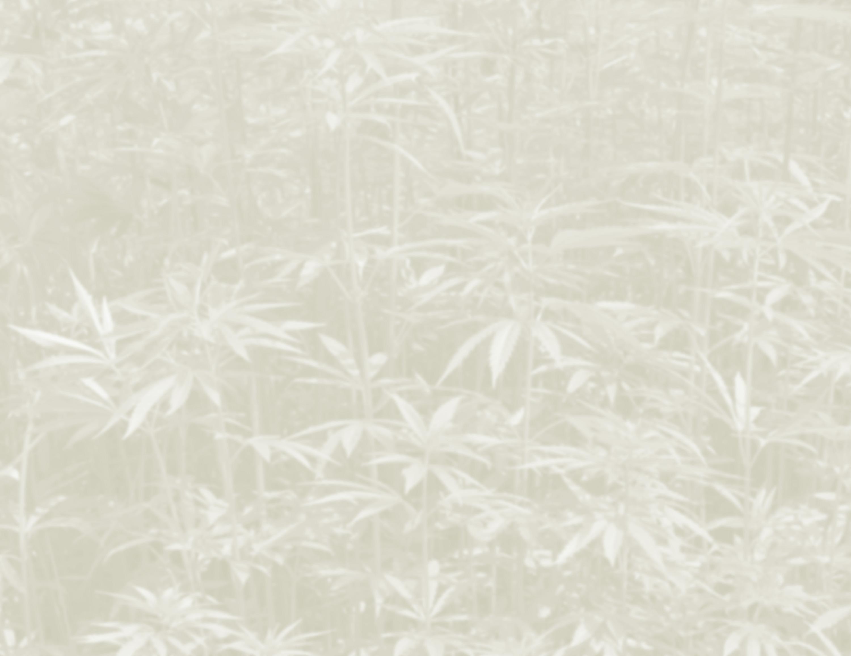 hemp-background2